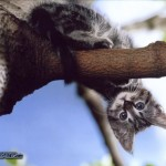 cat-on-a-tree-172338